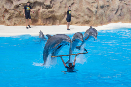 Het springen van dolfijnen bij dolfijnenshow in Loro Parque in Tenerife, Spanje. Stockfoto - 75037528