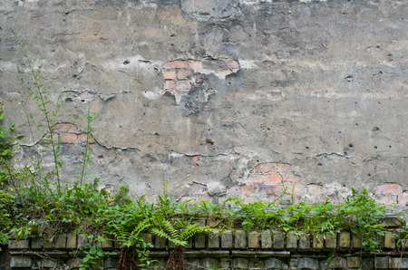 crack: vintage wall background -  peeling plaster and overgrown brick stone wall