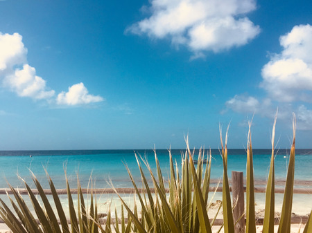 beach, cean, blue sky and palm tree leaves - summer vacation concept -