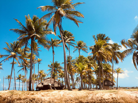 lonely island , small tropical palm tree island - travel destination Stock Photo