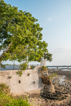 Big tree at historic coast wall in Casco Viejo in Panama City - historical architecture Фото со стока - 102126832
