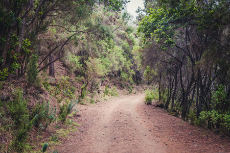 rural road in forest landscape - pathway in wilderness  nature