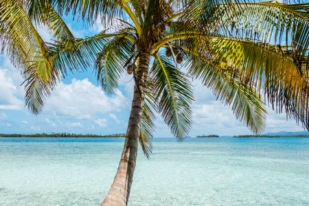 plam tree with beach and ocean background - tropical island