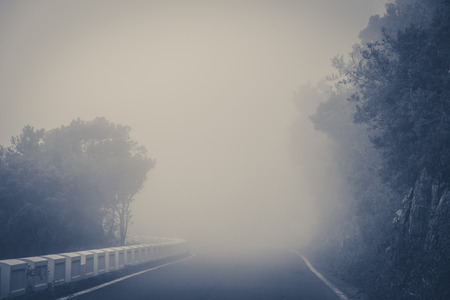 empty road in thick fog in forest landscape
