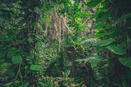 dentro de la jungla, en la selva / paisaje de bosque tropical Foto de archivo