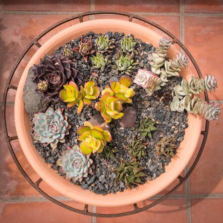 mixed mini succulent plants in pot - outdoor succulents 写真素材