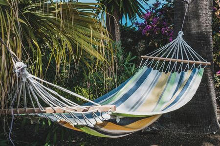 hammock between palm trees - vacation concept