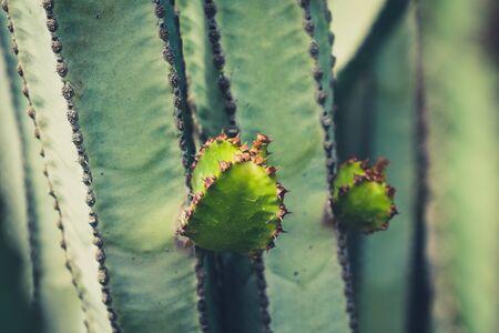 cacti plants detail -  cactus plant closeup
