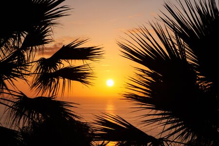 sunset sky over ocean water with palm trees