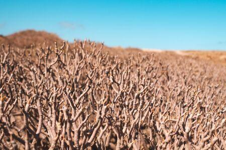 dry bush or tree closeup in desert landscape