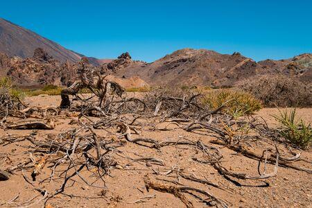 Dead tree and driep up vegetation in dry desert landscape 写真素材
