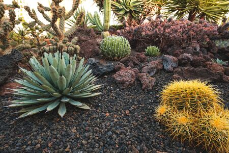 cactus garden with variuos cacti plants and succulents
