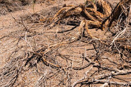 driep up plants, drought tree in desert landscape