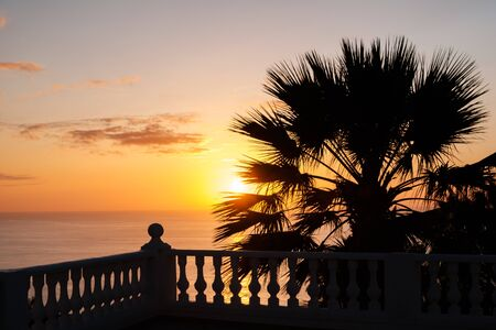 ocean view terrace with sunset sky background and palm tree - 写真素材