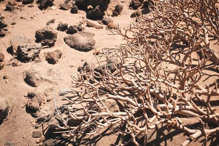 dry tree or dried up bush in  desert landscape