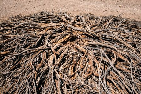 Driep up bush or dry tree in desert landscape - drought