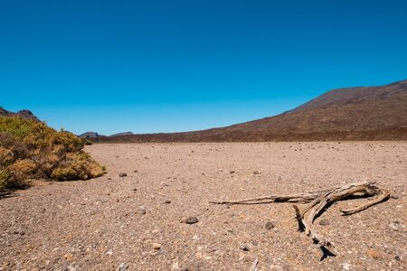 dry stone desert landscape with driep up vegetation on hot sunny day 写真素材