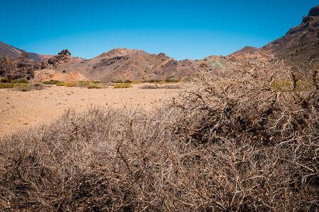 Driep up bush in hot stone desert landscape