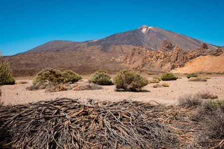 driep up vegetation or dead tree in desert landscape on Volcano Pico del Teide -