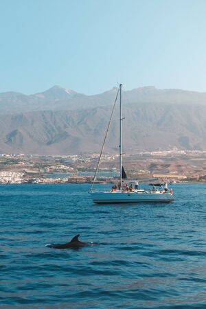 people on sailing boat looking at dolphin on whale watching tour -