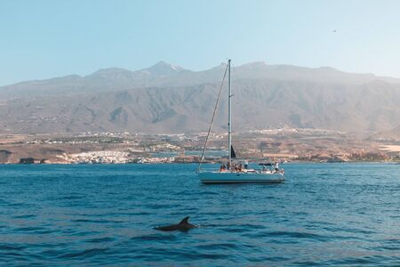 group of people on boat for whale watching tour looking at dolphin - Stok Fotoğraf
