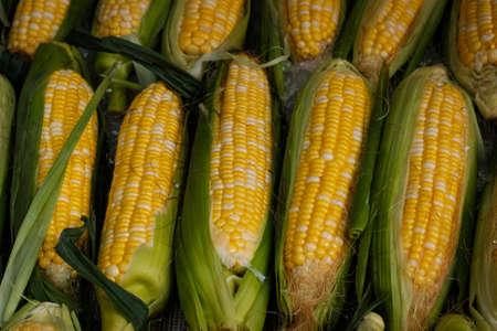 fresh corn on market , corncobs closeup