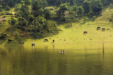 Vietnamese rural scene, with children swimming on the lake and water buffaloes eating grass on beyond hill Stock Photo