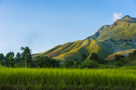 vietnamese ethnicity: Vietnam rural scene with rice paddy field, mountain and blue sky at sunset time