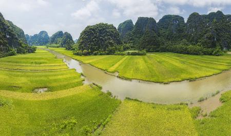 タムコック、ニンビン、ベトナムの田んぼ