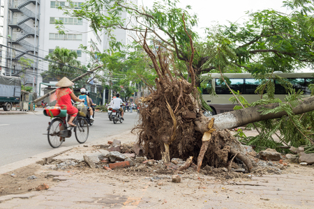wind down: Fallen tree damaged on street by natural heavy wind storm Stock Photo