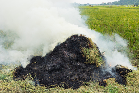 fertilizing: Rice straw is burnt after separating rice seed in Asian rice field. The ash will be used for fertilizing by next cultivated season