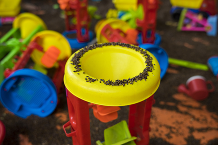 Kid colourful toys with man made sand from cassia tora seed