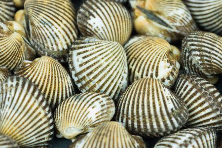 ridged: Shells blood cockles Stock Photo