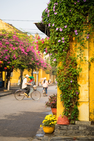 Aged yellow wall with climbing flower plant against street with old man on bike on background in Hoi An ancient town. Hoi An is UNESCO site