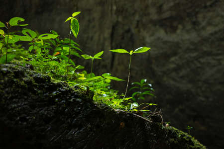 Plants among rocks in Son Doong Cave, the largest cave in the world  Site Phong Nha-Ke Bang National Park, Quang Binh province, Vietnam