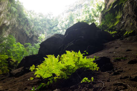 Silhouette plants among rocks in Son Doong Cave, the largest cave in the world in UNESCO World Heritage Site Phong Nha-Ke Bang National Park, Quang Binh province, Vietnam