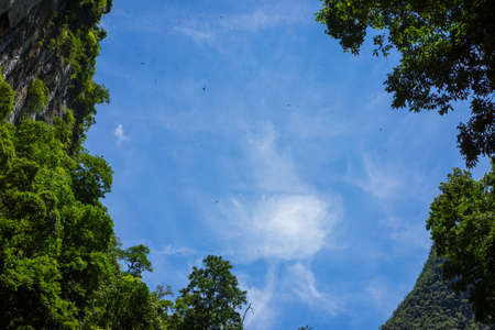 third world: Sky view with thousands of flying swallows from the forest at mouth of En Cave, the third largest cave in the world in Quang Binh province, Vietnam