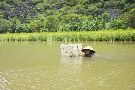 ensis: Ninh Binh, Vietnam - May 16, 2015: Vietnamese woman catches freshwater shellfish on river in Tam Coc. Life is difficult to a lot of poor people living in rural area in Asia