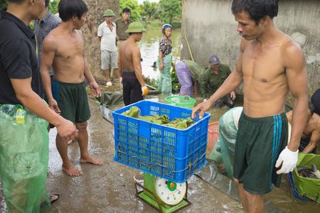 trawl: Hung Yen, Vietnam - July 26, 2015: Farmers harvesting fish from pond in Hung Yen Editorial