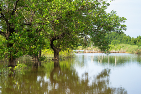 Mangrove forest in Ca Mau province, Mekong delta, south of Vietnam Stock Photo