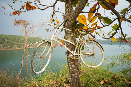 Bicycle decoration hang on Indian almond tree