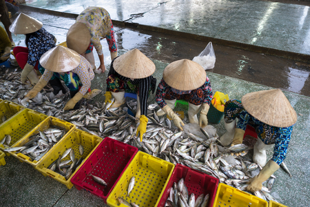 Caught fishes sorting to baskets by Vietnamese women workers in Tac Cau fishing port, Me Kong delta province of Kien Giang, south of Vietnam Reklamní fotografie