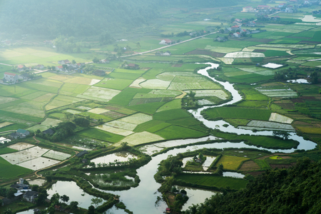 Rice field in Bac Son valley in Vietnam