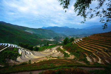 Terraced rice field in water season, the time before starting grow rice in Y Ty, Lao Cai province, Vietnam 版權商用圖片