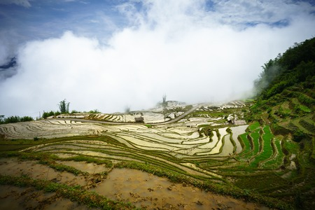 Terraced rice field in water season, the time before starting grow rice, with clouds on background in Y Ty, Lao Cai province, Vietnam