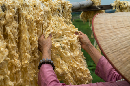 Raw of threads extracted from the cocoon of the silkworm drying outdoor, with Vietnamese woman hands separating the threads