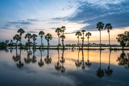 Sunrise landscape in sugar palm tree field in Chau Doc, An Giang, Mekong delta, Vietnam Stock Photo