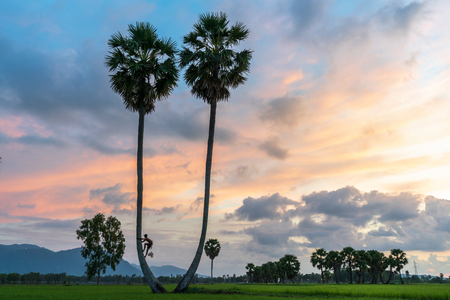 Sunset landscape with sugar palm trees in Chau Doc, An Giang, Mekong delta, Vietnam Stock Photo