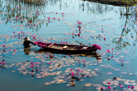 Yen river with rowing boat harvesting waterlily in Ninh Binh, Vietnam Zdjęcie Seryjne - 122299037