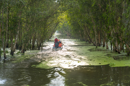 Tourism motorboat in cajuput forest in floating water season in Mekong Delta, Can Tho, Vietnam Imagens